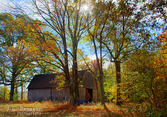 Nestled in the Woods (J.L. Ramsaur Photography (Thank You for 4 million ) Tags: fall fallcolors fallleaves fallseason fallinthesouth colorful colors autumn autumncolors autumninthesouth autumnleaves falltrees autumntrees rural ruralamerica ruraltennessee ruralview oldbuildings structuresofthesouth smalltownamerica americana oldbarn vintagebarn retrobuilding oldbuilding vintagebuilding faded ruralbarn ruralbuilding tinroof abandoned abandonedplacesandthings abandonedneglectedweatheredorrusty beautifuldecay tennesseehdr hdr worldhdr hdraddicted bracketed photomatix hdrphotomatix hdrvillage hdrworlds hdrimaging hdrrighthererightnow jlrphotography nikond7200 nikon d7200 photography photo tennessee 2016 engineerswithcameras cumberlandplateau photographyforgod thesouth southernphotography screamofthephotographer ibeauty jlramsaurphotography photograph pic sun sunrays sunlight daytime sunglow orange yellow blue