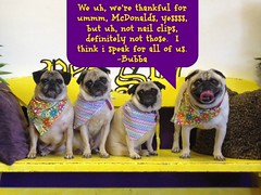 """TaylorPugs • <a style=""""font-size:0.8em;"""" href=""""http://www.flickr.com/photos/125552549@N03/30361729124/"""" target=""""_blank"""">View on Flickr</a>"""