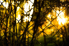 Befor the Sun goes Down (wolfi8723) Tags: fence fencefriday zaun sunset sunshine sun outdoor outside