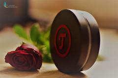 teufel_Rose (ramonaschmitt) Tags: rose red black grau teufel