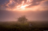 Tras la luz Baztan 2 (juan luis olaeta) Tags: canon canoneos60d sigma1020 photoshop lightroom paisages landscape sunset atardecer contraluz natura baztan navarra nafarroa paisvasco euskalherria basquecountry