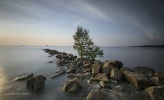 The Single Tree (abduljalilhassan975) Tags: landscape beauty beautiful longexpose filter travel tourism seascape rock tree single jeram