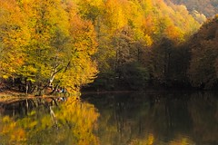 It's not too late... (RKAMARI) Tags: 2015 bolu cities yedigllernationalpark autumn contemplative forest intimatelandscape lake landscape miksang mountains nature outdoor reflections travel trees water