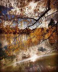 Doble reflejo #lago #lake #Puigcerd #estany #agua #arbol #tree #sol #sun (Miamy7) Tags: instagramapp square squareformat iphoneography uploaded:by=instagram hefe naturaleza naturalezacautivadora arbol tree lago lacerdanya puigcerd lake sol sun