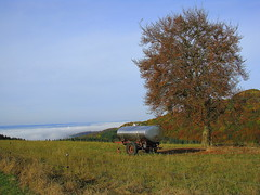 Weide mit Herbstnebel im Tal (willi.kampf) Tags: herbstnebel weide herbst feld bume laub bunt