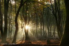 """After every storm the sun will smile"" (William R. Alger) (Renate van den Boom) Tags: 11november 2016 boom bos europa gelderland jaar landschap maand natuur nederland renatevandenboom speulderbos zon zonsopkomst"