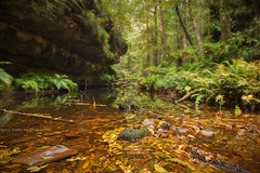 Hiking In Blackheath || BLUE MOUNTAINS || AUSTRALIA (rhyspope) Tags: australia aussie nsw new south wales blue mountains blackheath grand canyon creek stream water reflection autumn fall leaves foliage rhys pope rhyspope canon 5d mkii nature
