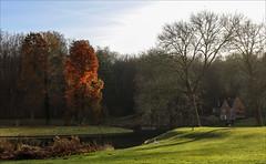 Photo challenge 49/52 - Autumn (chando*) Tags: arbres automne autumn belgique belgium brabantflamand fall photochallenge tervuren trees vlaamsbrabant