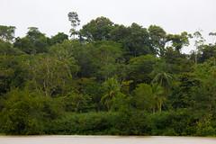 Costa Rica (jorge.cancela) Tags: costa rica america wild nature naturaleza humedal nacional térraba sierpe