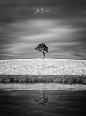 Ice Cold Reflection (Chris Sweet Photography) Tags: tree mono landscape reflection frozen ice winter lonetree isolation drama tone tamron nikon