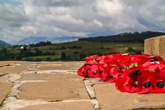 Poppies at Commando Memorial (Jean-Paul Navarro) Tags: scotland summer 2016 highlands unitedkingdom isles commando memorial british forces world war ii spean bridge