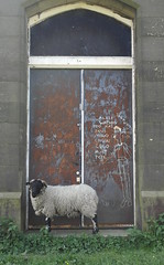 Very Marsden (A M H 2012) Tags: door sheep marsden