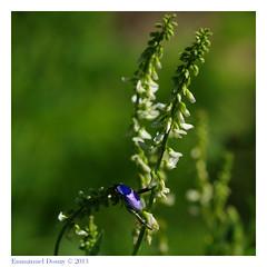 U3ZT9732 (☆♺☆) Tags: vert bleu blanc uzzz u3z hoplie