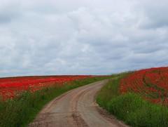 In the summertime (Marie Granelli) Tags: road red summer sky field june skne sweden explore sdersltt