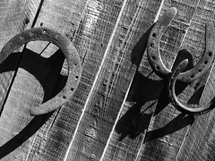 Our Horseshoes (cycle.nut66) Tags: wood blackandwhite white black texture monochrome fence four wooden rust iron nail grain olympus holes hanging zuiko horseshoes forged greyscale thirds evolt e510