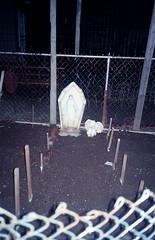 garden (Jacob Seaton) Tags: