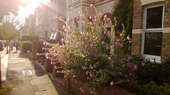 Dramatic late summer light - no filters at all (Gab & Liz) Tags: flowers light sun refraction
