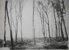 Quarry Woods (Abbie Lou) Tags: light film project landscape large paintingwithlight format liquid trossachs eca emulsion 5x4 2013 cambusmore residualityinthelandscape