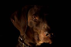 Best Friend (juliofromero) Tags: amigo friend brownie bestfriend lowkey loyal fiel mejoramigo canont3