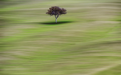 Lonely tree (Daniel Schwabe) Tags: italy tree green field velvet tuscany toscana valdorcia bestcapturesaoi elitegalleryaoi