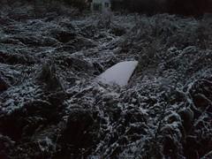 DSC_1891 (leaf watoru) Tags: snow darky