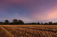 (Annalocke) Tags: sunset canon sonnenuntergang herbst sigma filter 1020mm acker herbstlaub cokin maisfeld 600d vision:sunset=058 vision:night=064