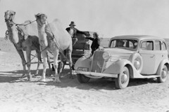 Man in camel drawn carriage beside car (State Records SA) Tags: blackandwhite car photography australia camel historical southaustralia camels vauxhall frankhurley srsa staterecords staterecordsofsouthaustralia staterecordsofsa