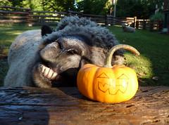 A Little Pre ~ Halloween Temptation (aprilamb) Tags: