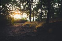 gelbe zeit (HerrBohn) Tags: trees light summer sunlight ava woods afternoon pentax availablelight beautifullight tamron halle k5 abenddmmerung hallesaale halleandersaale tamron1750mm28 galgenbergschlucht pentaxk5 herrbohn cheerfullight
