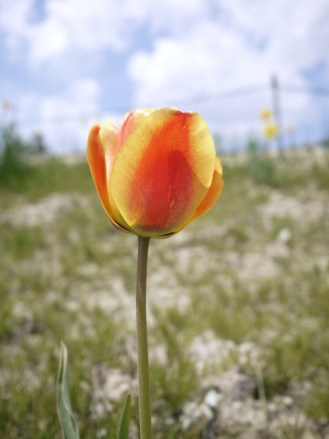 生えてるお花がこんなに綺麗☆|那須高原南ヶ丘牧場