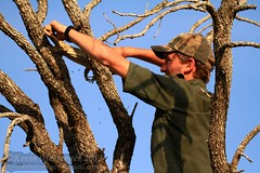 White-throated monitor (Varanus albigularis) (Kevin Messenger) Tags: monitor varanus whitethroated albigularis mpumalangaprovince southafricatimbavaticanonwildlifeherpetology