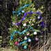 Trees_of_Loop_360_2013_276