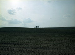 family tree. (pecomaru.com) Tags: trip sky tree 120 film japan mediumformat 645 asia hokkaido pentax kodak   filmcamera biei f28 45mm  ektar analogphoto analogcamera negativefilm colornegativefilm pentax645n  kodakektar100 ektar100 smcpentaxfa64545mmf28