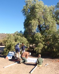 004 Preparing Registration (saschmitz_earthlink_net) Tags: california tree orienteering registration aguadulce vasquezrocks losangelescounty 2013 laoc losangelesorienteeringclub