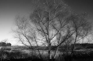 Moon in Winter Tree