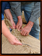 Stitching Up the Old Gunny Sacks:  Old Time Farm Day, Dail Farm, Dogtown Vicinity, Edgecombe County, North Carolina (EdgecombePlanter) Tags: people portraits nc farmers farm farming harvest northcarolina peanuts carolina agriculture demonstrations oldtimey peanutfarming easternnorthcarolina edgecombe