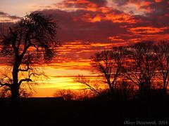Sky is burning in Germany (Oliver Deisenroth) Tags: sunset tree dusk olympusstylus1