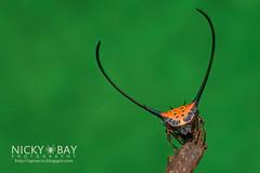 Long-horned Orb Weaver (Macracantha arcuata) - DSC_4190 (nickybay) Tags: macro spider orb malaysia weaver johor arcuata araneidae longhorned pantiforest macracantha