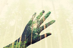Nature (alicehopedenny) Tags: trees shadow green nature silhouette forest photography hands woods exposure experimental natural body norfolk experiment double multiple form bacton alevel