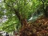 Hong Kong HDR (shinnygogo) Tags: china city people tree asia busy biztrip hdr honking photomatix
