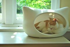 He's getting an ear tan. (rootcrop54) Tags: otis male ginger orange tabby whiskas cat head bed sunning sunshine morning sunroom 고양이 macska kedi 猫 kočka kissa γάτα köttur kucing gatto kaķis katė katt katzen kot pisică кошка mačka maček gorbe kitteh whiskascatheadbed