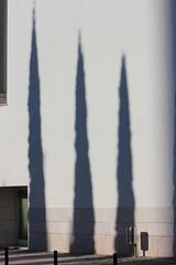 III. (Hélder Cotrim) Tags: portugal lisboa expo parquedasnações sombra shadow white trio branco ciprestes canon vertical lisbonne lisbon lissabon vertikal verticale κάθετη lisbona лиссабон λισαβόνα portogallo πορτογαλία португалия