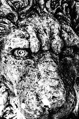The Lion (Thad Zajdowicz) Tags: lion sculpture blackandwhite black white bw art monochrome picasa face animal eye nose fierce zajdowicz canon eos 30d dslr digital highcontrast publicart stone outdoor outside texture noiretblanc blancoynegro