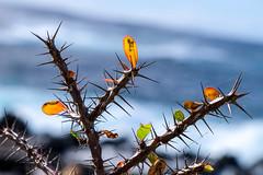 DSCF8133 (codrin44) Tags: anaga canarias joana masca taganana teide tenerife yves mer