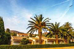 Agay Cte dAzur (Radek Lokos Fotografie) Tags: radeklokosfotografie agay cte azur france mediterranean beach palm strand travel reisen blue sky