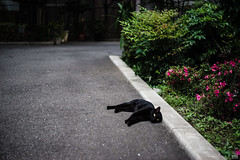 (yasu19_67) Tags: pentacon50mmf18 sony7ilce7 filmlook digitaleffects atmosphere cat photooftheday 50mm osaka japan