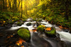 Fall in the Gorge I (Wind Walk) Tags: columbia river gorge fall waterfall gorton creek autumn color leave stream moss oregon