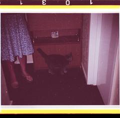 Numbers. 110/1031 (Mrs.Black&White) Tags: 110 110film film pointshoot oldscans 1980s