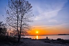 As Unfailing as the daylight (Lojones13) Tags: nikon1v1 tree sunrise morning sky outdoor twinisland bronx newyork daylight magichour