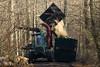 ckuchem-7213 (christine_kuchem) Tags: wald abholzung baum baumstämme bäume einschlag fichten holzeinschlag holzwirtschaft waldwirtschaft
